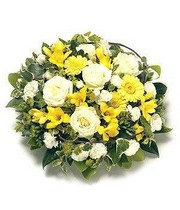 Yellow Posy.