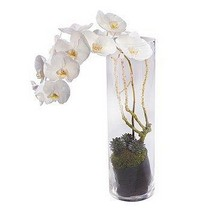 White Orchid Vase Arrangement.